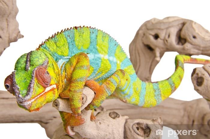 Vinilo Pixerstick Camaleón de colores - Temas