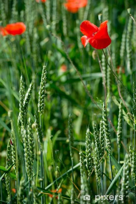 Naklejka Pixerstick Kwiaty - Maki - Wheat - Kwiaty