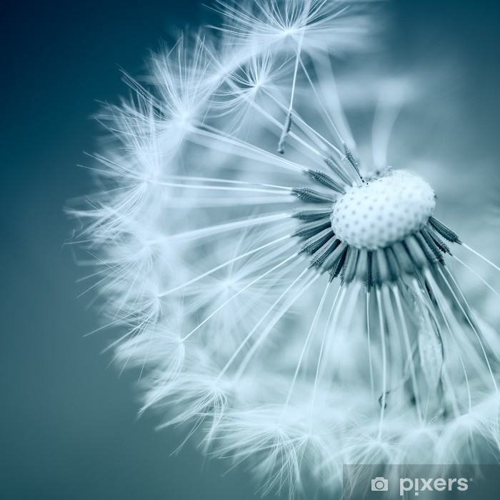 Dandelion Poster - Themes