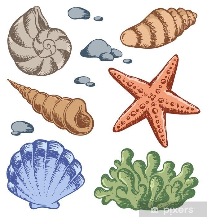 Deniz Kabukları çizimleri 1 Duvar Resmi Pixers Haydi Dünyanızı