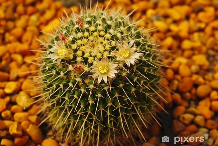 Sticker Pixerstick Fleur de cactus - Santé et médecine