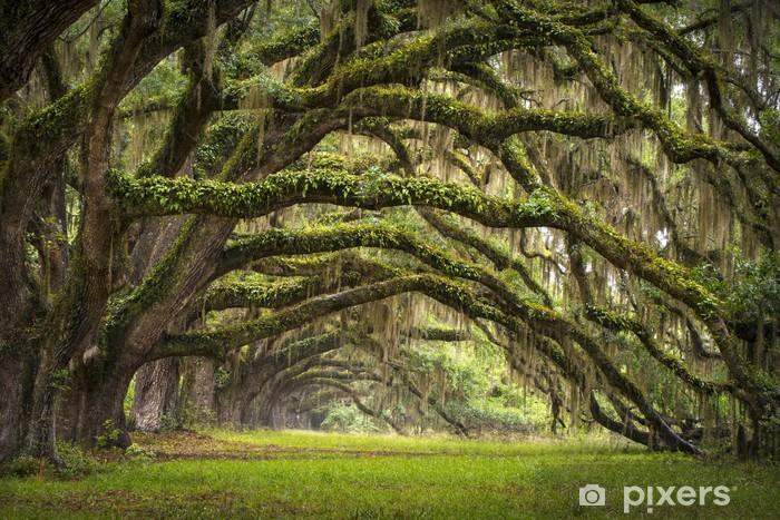 Pixerstick-klistremerke Oaks Avenue Charleston SC plantasjer Live Oak trees skog - Styles