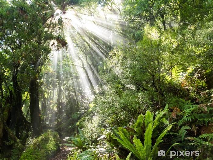 Fototapeta winylowa Promienie wiązki światła słonecznego koryta gęstej dżungli tropikalnej - Tematy