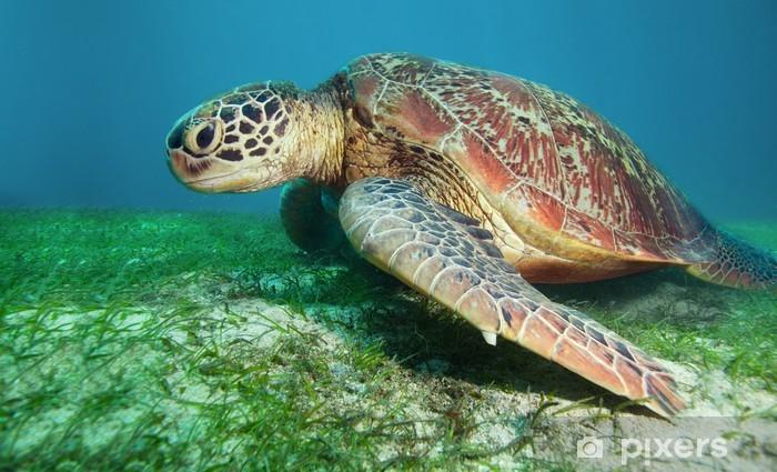 Naklejka Pixerstick Żółw na dole wodorostów - Oceania