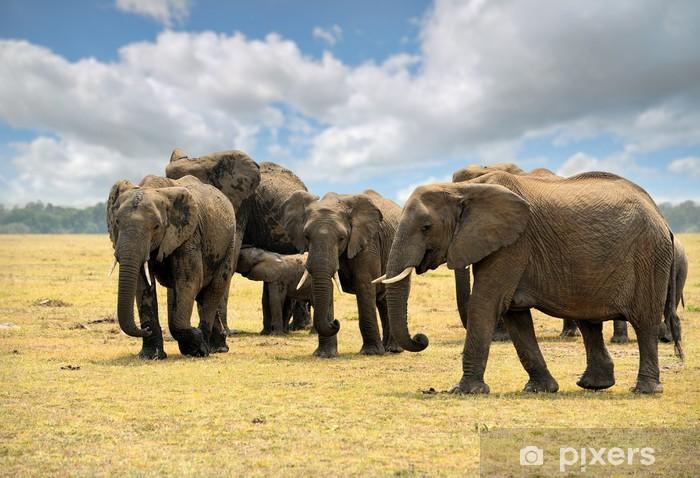 Papier peint vinyle Les elephants - Thèmes