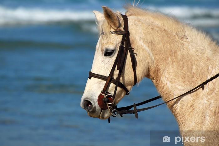 Papier peint vinyle Profil de tête de cheval portrait - Mammifères