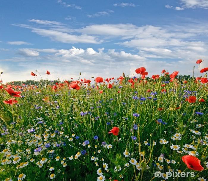 Fototapeta samoprzylepna Wiosna łąka z stokrotki, chabry i maki - Łąki, pola i trawy