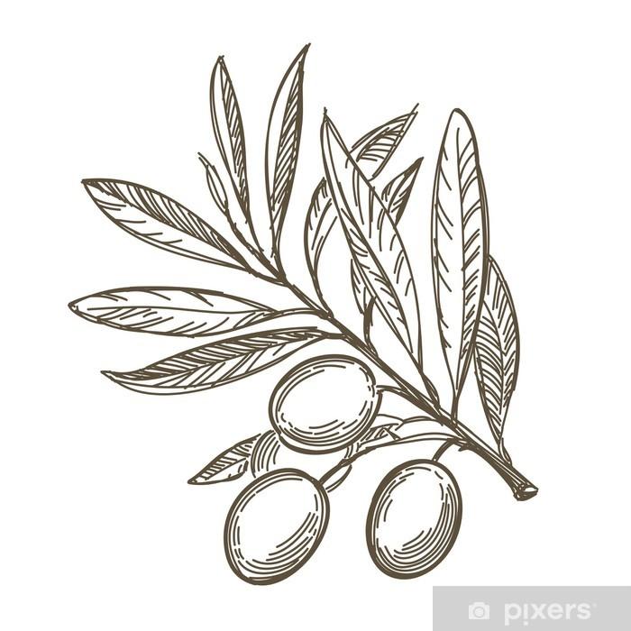 Naklejka Pixerstick Szkic wektor gałęzi drzewa oliwnego - Tematy