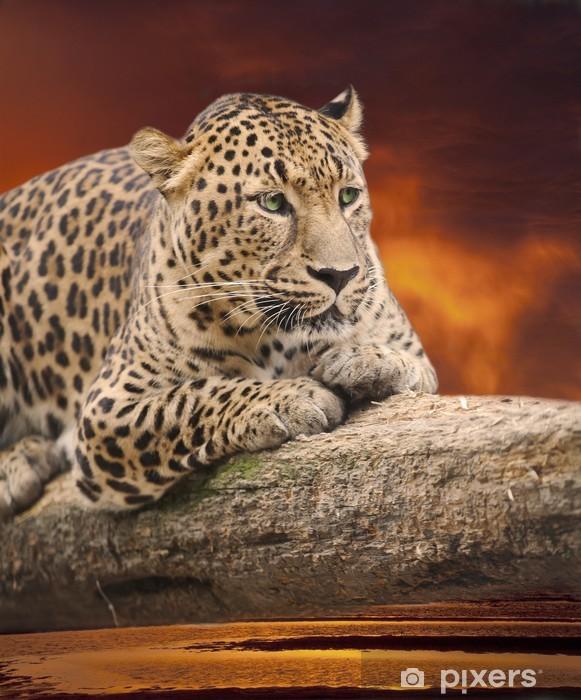 Sticker Pixerstick Leopard à s'allonger sur un journal contre un coucher de soleil - Mammifères
