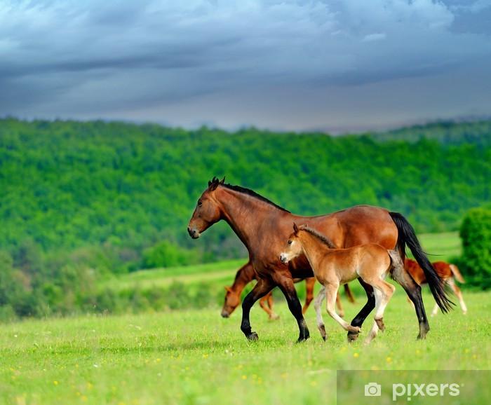 Fototapeta winylowa Konie - Ssaki