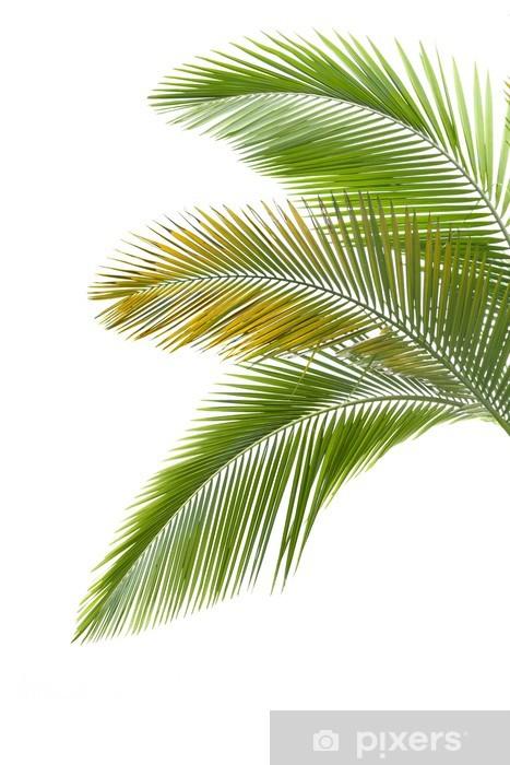 Papier peint vinyle Les feuilles de palmier - Sticker mural