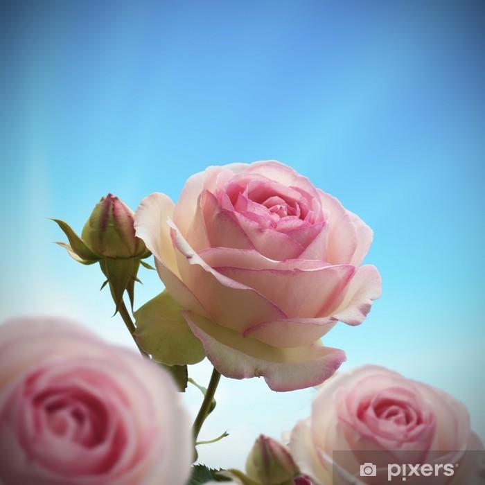 rosier grimpant, fleurs roses couleur rose, ciel bleu Vinyl Wall Mural - Themes