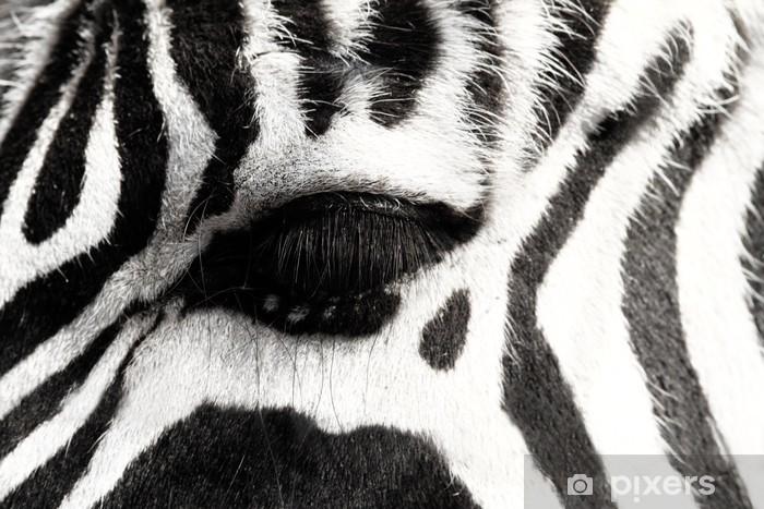 Fototapeta zmywalna Zebra - Tematy
