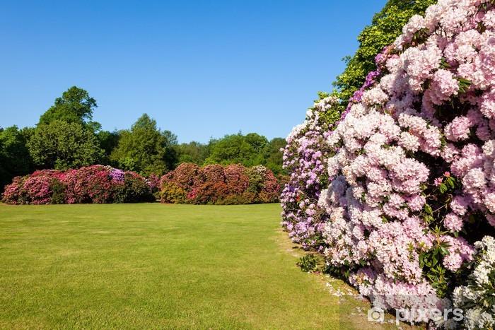 Fototapete Schöne Blume Rhododendron Büsche und Bäume in einem sonnigen  Garten