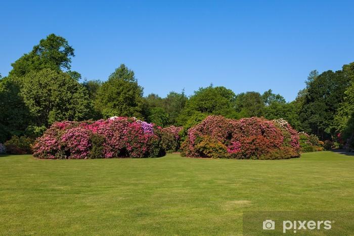 Aufkleber Schöne Blume Rhododendron Büsche und Bäume in einem sonnigen  Garten - Pixerstick
