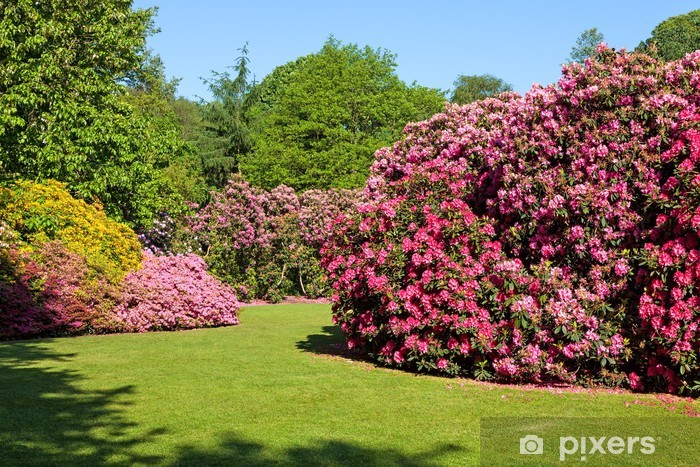 Rhododendron And Azalea Bushes In Beautiful Summer Garden Wall