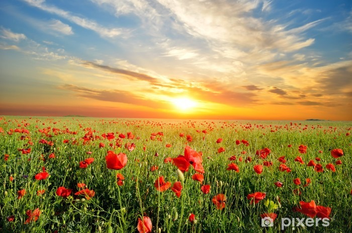 field with poppies Pixerstick Sticker - Themes