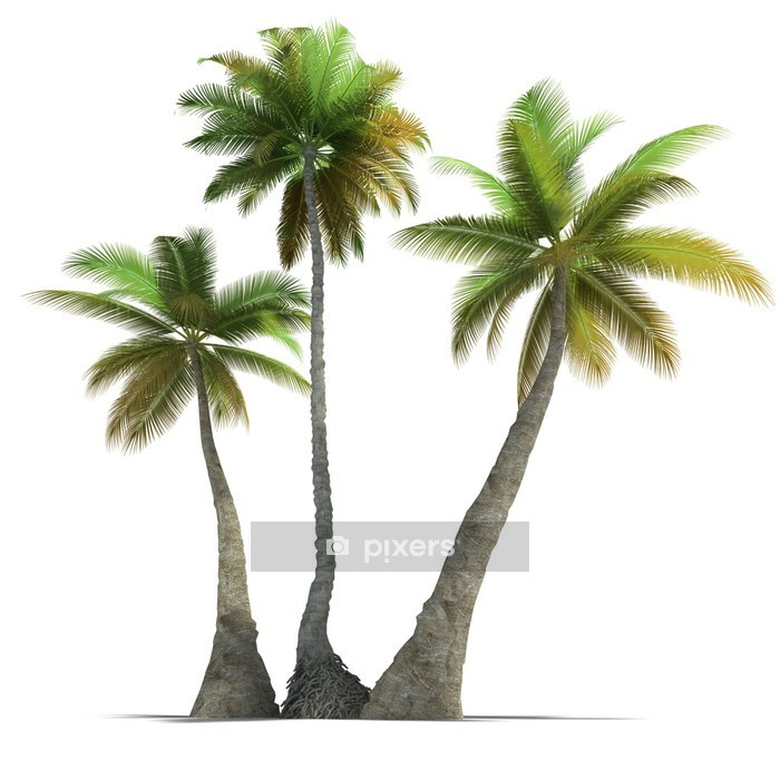 Palm Tree Trio Rendering Wall Decal