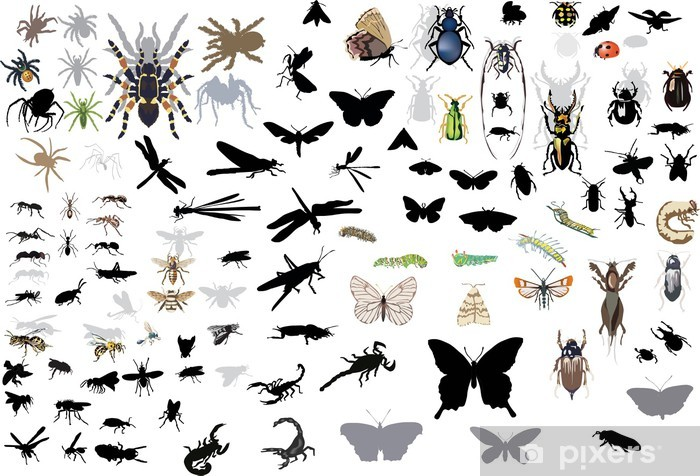 large set of isolated insects and spiders Vinyl Wall Mural - Other Other