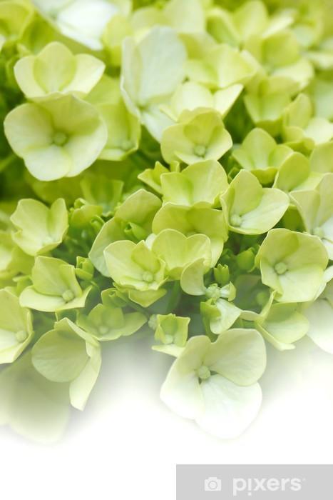 Dreamy Green Hydrangeas Pixerstick Sticker - Flowers