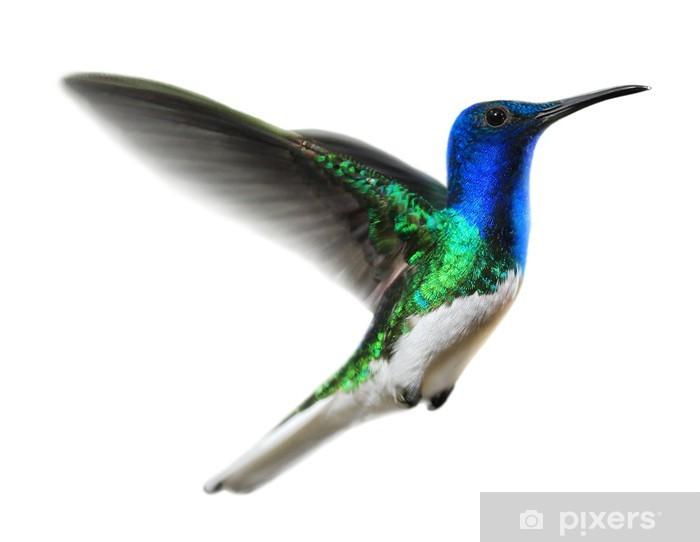 Kolibri Auf Weiss Sticker Pixers 174 We Live To Change
