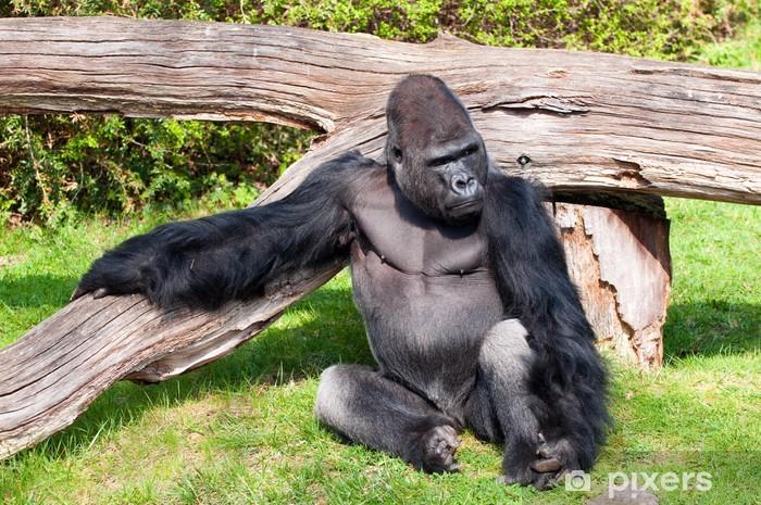 41de5f65c3eab Vinyl-Fototapete Gorilla in Berlin Zoologischer Garten - Europäische Städte