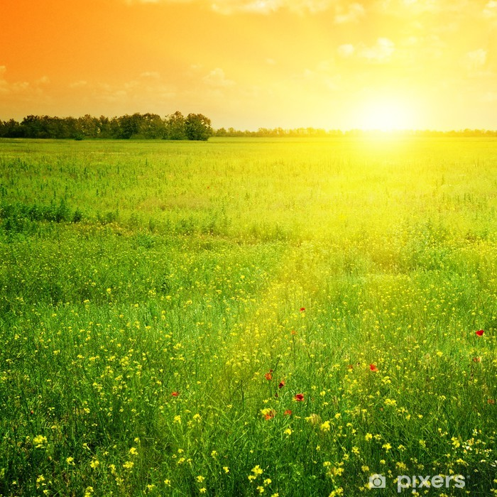 Vinilo Pixerstick Hermosa puesta de sol - Temas