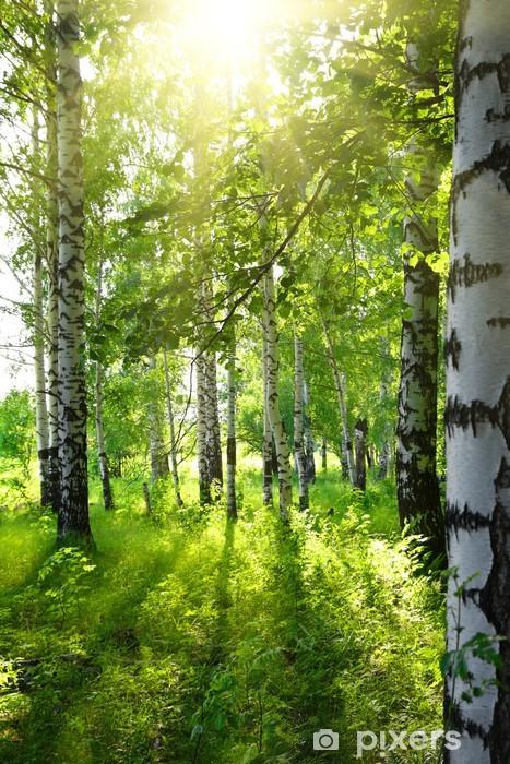 summer birch woods with sun Pixerstick Sticker - Destinations