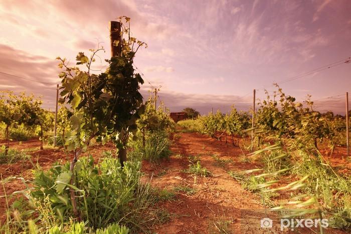 Naklejka Pixerstick Winnicy we Francji na wschód słońca - Rolnictwo