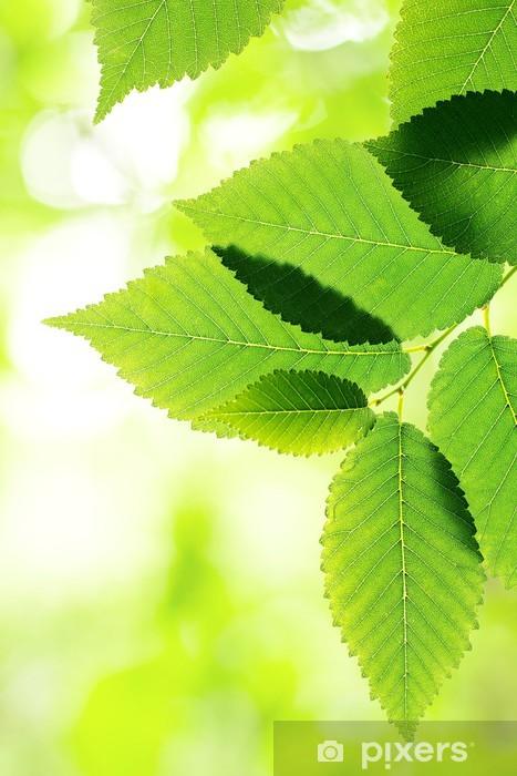 Fototapeta samoprzylepna Piękne zielone liście zbliżenie. Liście granicę - Tematy