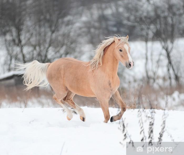 Plakat Palomino pony - Ssaki