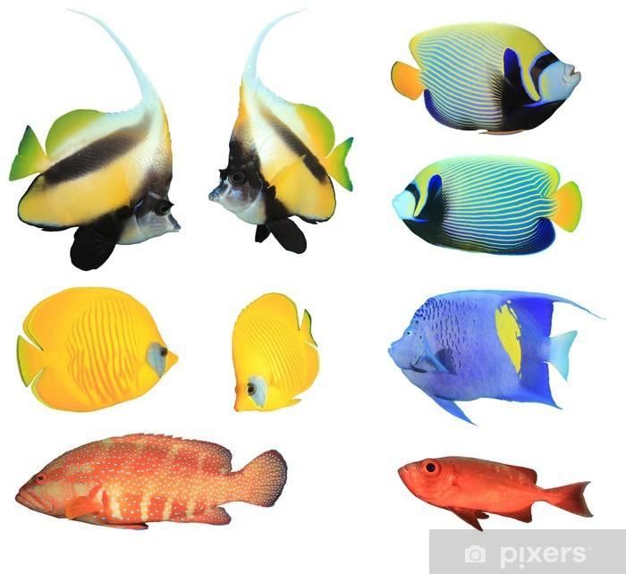 Nálepka Pixerstick Sbírka Tropické ryby izolovaných na bílém - Vodní a mořský život