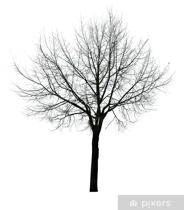 Fototapeta winylowa Ciemne pozostawia wolny pojedyncze drzewo - Drzewa