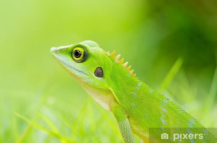 Fototapeta winylowa Piękna zielona jaszczurka gecko - Tematy