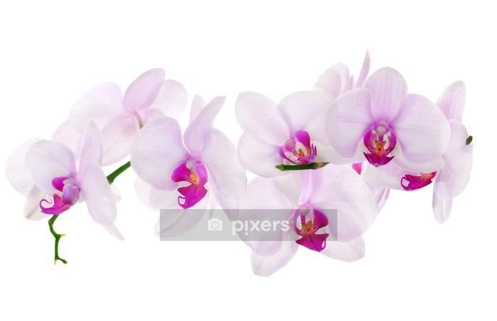 Sticker mural Beaucoup de lumière rose orchidées isolées - Sticker mural