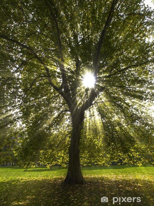 Fototapeta winylowa Kostium zerwania przez drzewa jawor - Pory roku