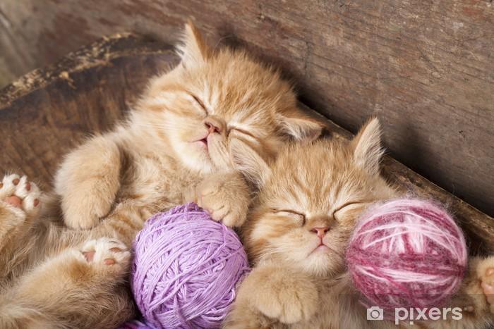 Fototapeta winylowa Kocięta do spania - Tematy