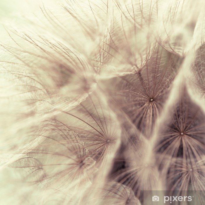 Abstract closeup of a meadow salsify Poster - Styles