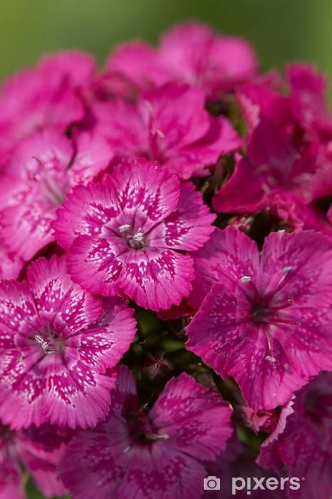 Papier peint vinyle Fleur rose - Fleurs