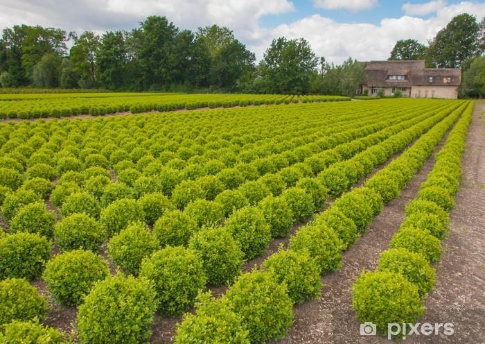 Papier peint vinyle Buxus pépinière aux Pays-Bas - Saisons