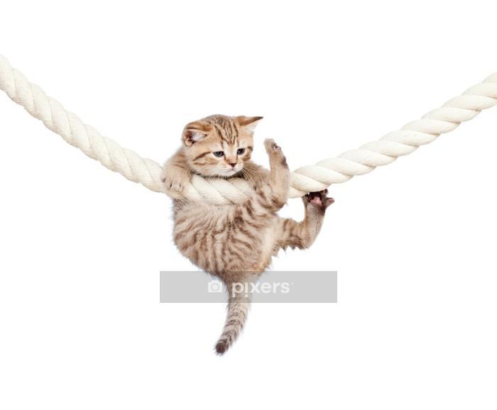 Muursticker Kleine kat geklemd op touw geïsoleerd op witte achtergrond - Zoogdieren