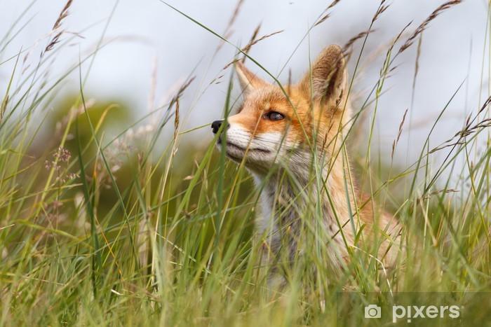 Vinyl Fotobehang Portret van een rode vos cub - Thema's