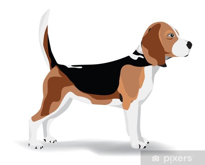 Vinyl Fotobehang Pies beagle - Zoogdieren