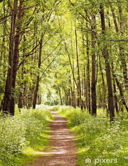 Pixerstick Sticker Pad in een zonnige zomer bos - Thema's
