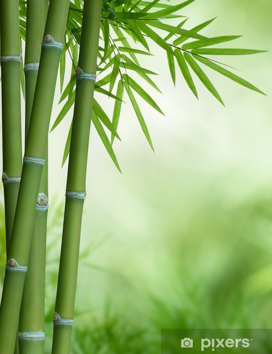 Bamboo Tree With Leaves Wall Mural Pixers We Live To Change