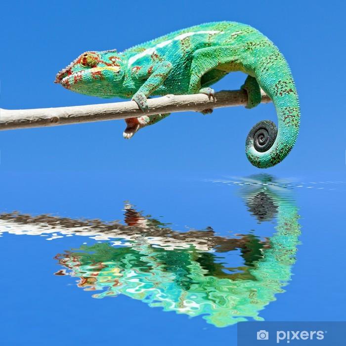 Naklejka Pixerstick Kameleon na gałęzi - Tematy