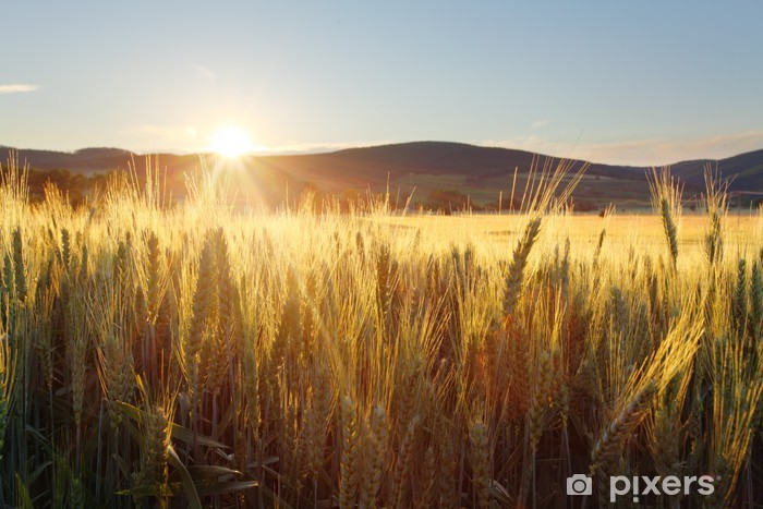 Sunset over wheat field Pixerstick Sticker - Themes