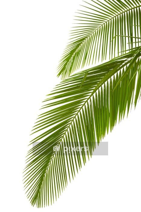 Adesivo da Parete Foglie di palma - Palme