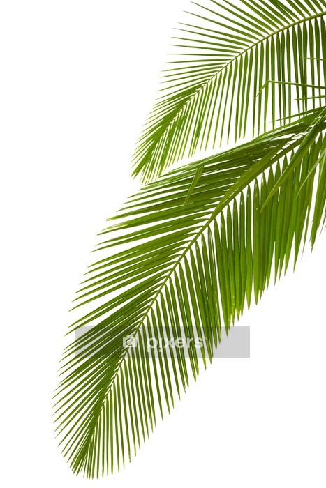 Leaves of palm tree Wall Decal - Palm trees