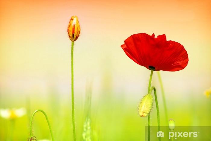 Sticker Pixerstick Coquelicot rouge et l'herbe - Thèmes